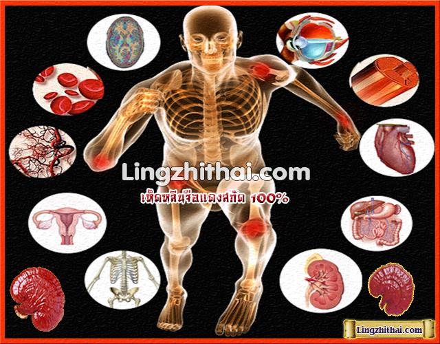 Lingzhithai Anatomy